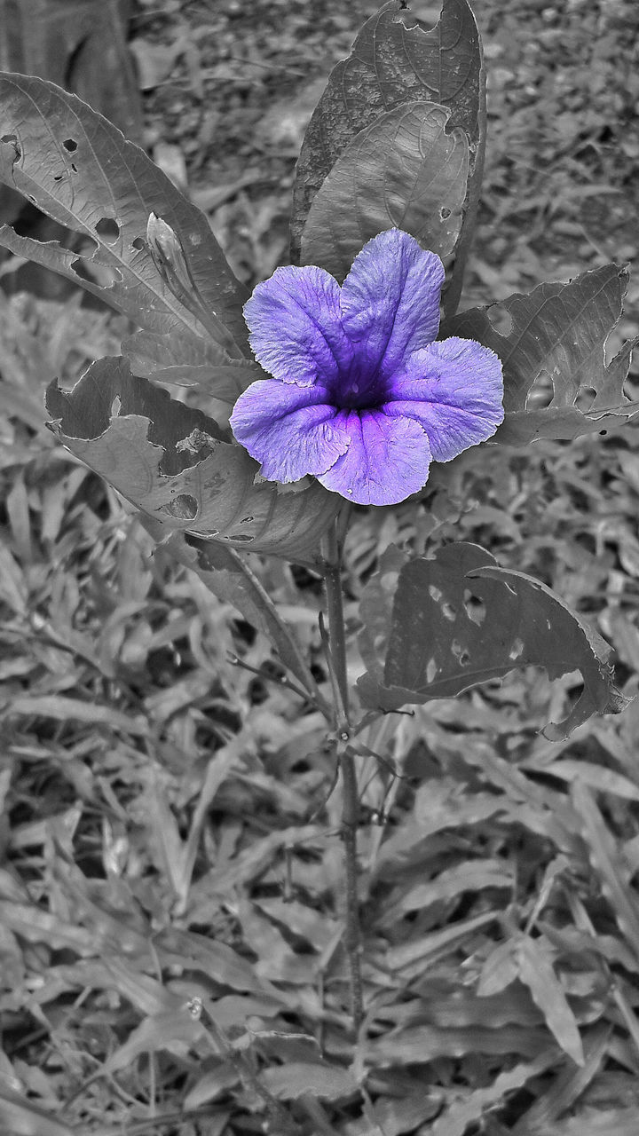 flower, petal, fragility, water, flower head, nature, beauty in nature, purple, freshness, no people, close-up, growth, plant, focus on foreground, day, outdoors, blooming, leaf, periwinkle