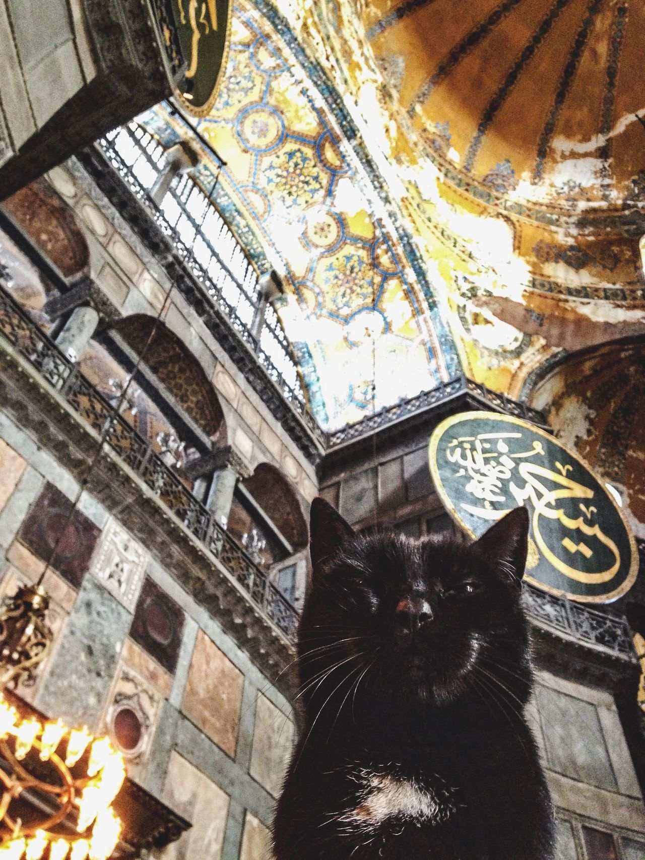 Cat RePicture Travel Mosque Dormir Traveling Stray Cat