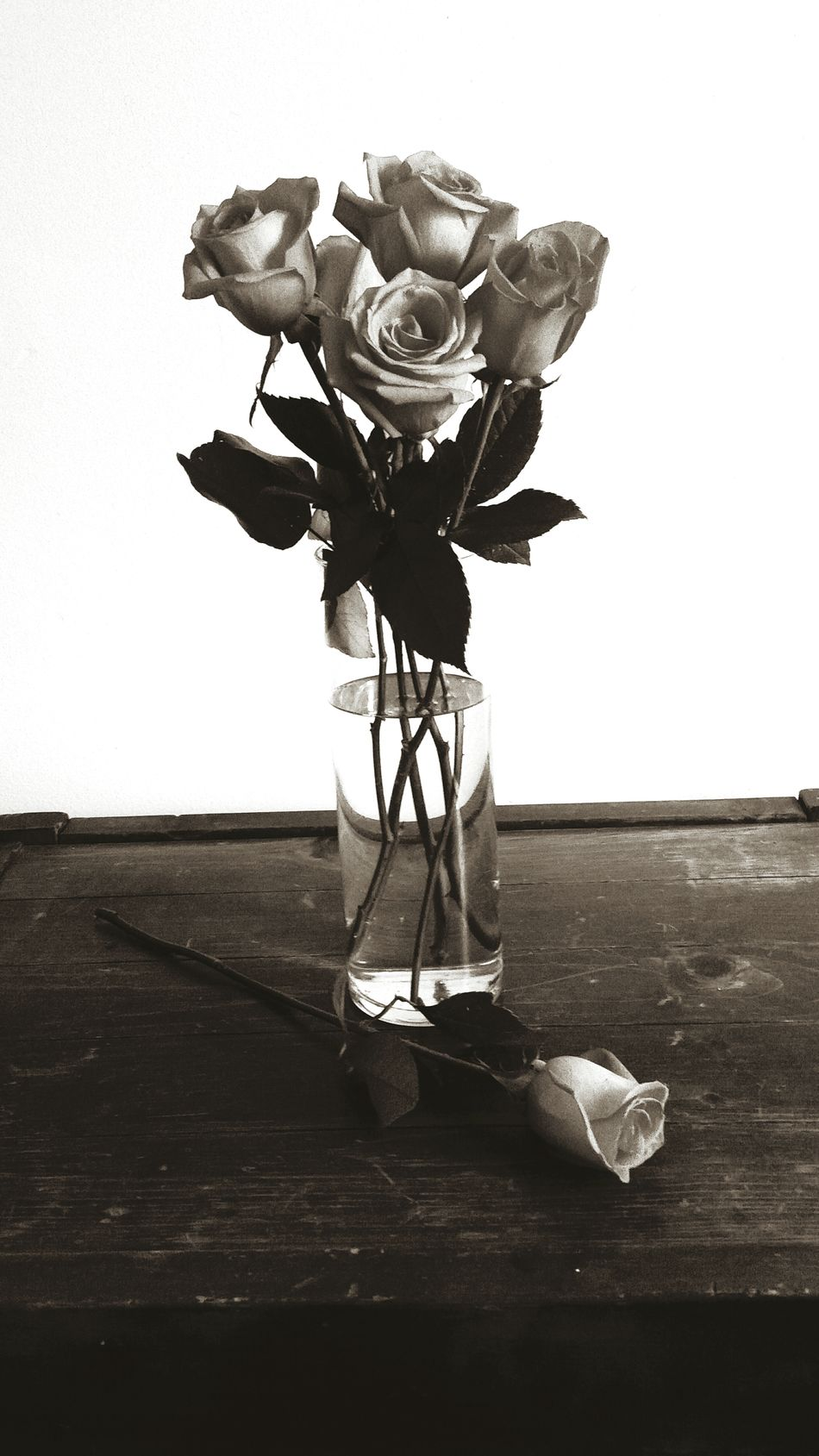 Roses Roses🌹 Vase Vase Of Flowers Six Half Dozen Petals Leaves Stems Sepia Sepiatone Sepia_collection Vintage Love Showing Imperfection Scratches Rustic