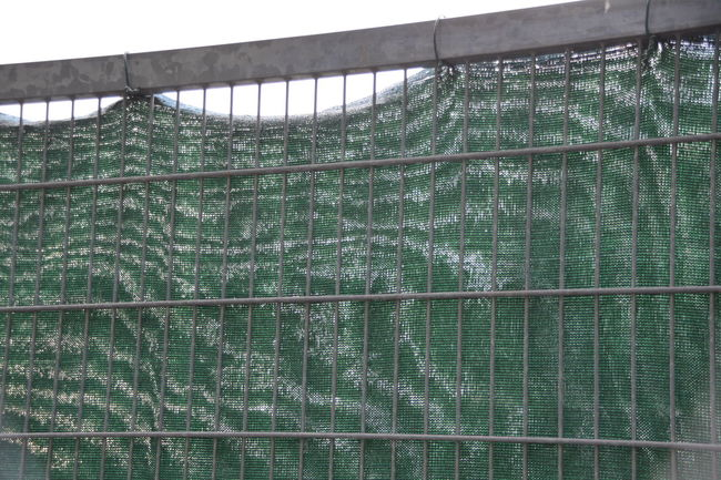 Blue Close-up Day Fragility Full Frame Green Color Nature Netting No People Outdoors Plant Protection Safety Weathered