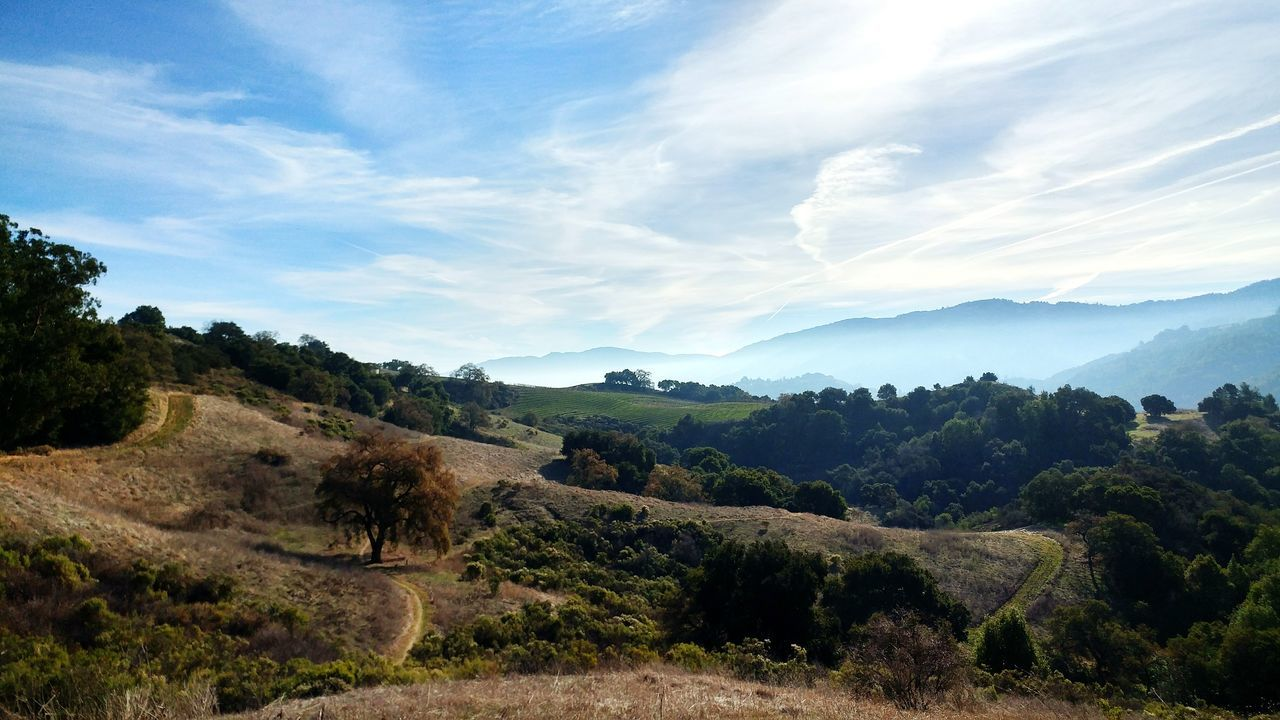 the hills fade into the distance behind hazy mist. Hiking Beautiful Views Dramatic Sky Rolling Hills Idyllic Scenery California Sunshine Tree Nature Cloud - Sky No People Tranquility Scenics Landscape Beauty In Nature Freshness Rural Scene
