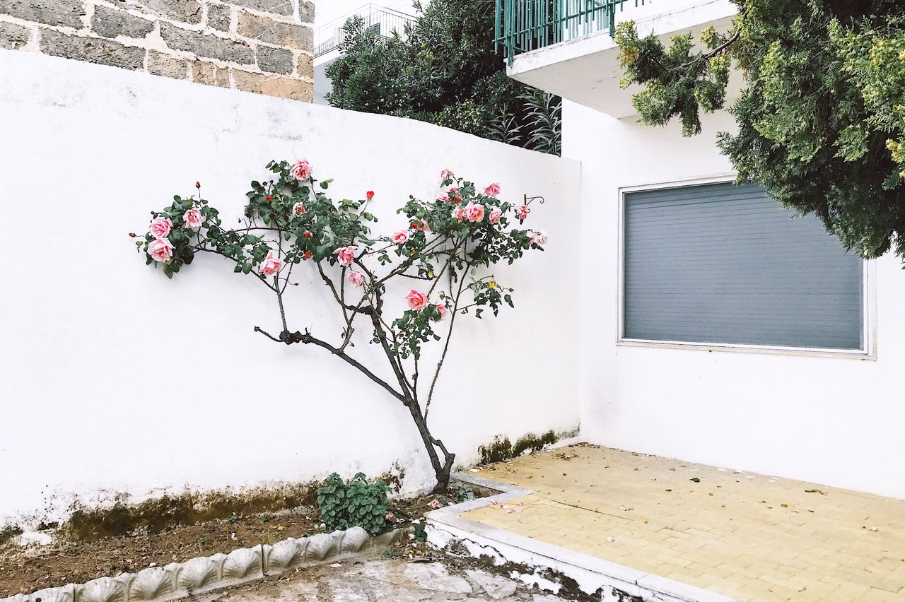 Building Exterior Nature Outdoors No People Flower Minimalist VSCO Cam Iphoneonly IPhone IPhoneography Iphonesia Minimalism IPhone Photography Iphonephotography Flowers Composition Light Atmospheric Mood Atmosphere House
