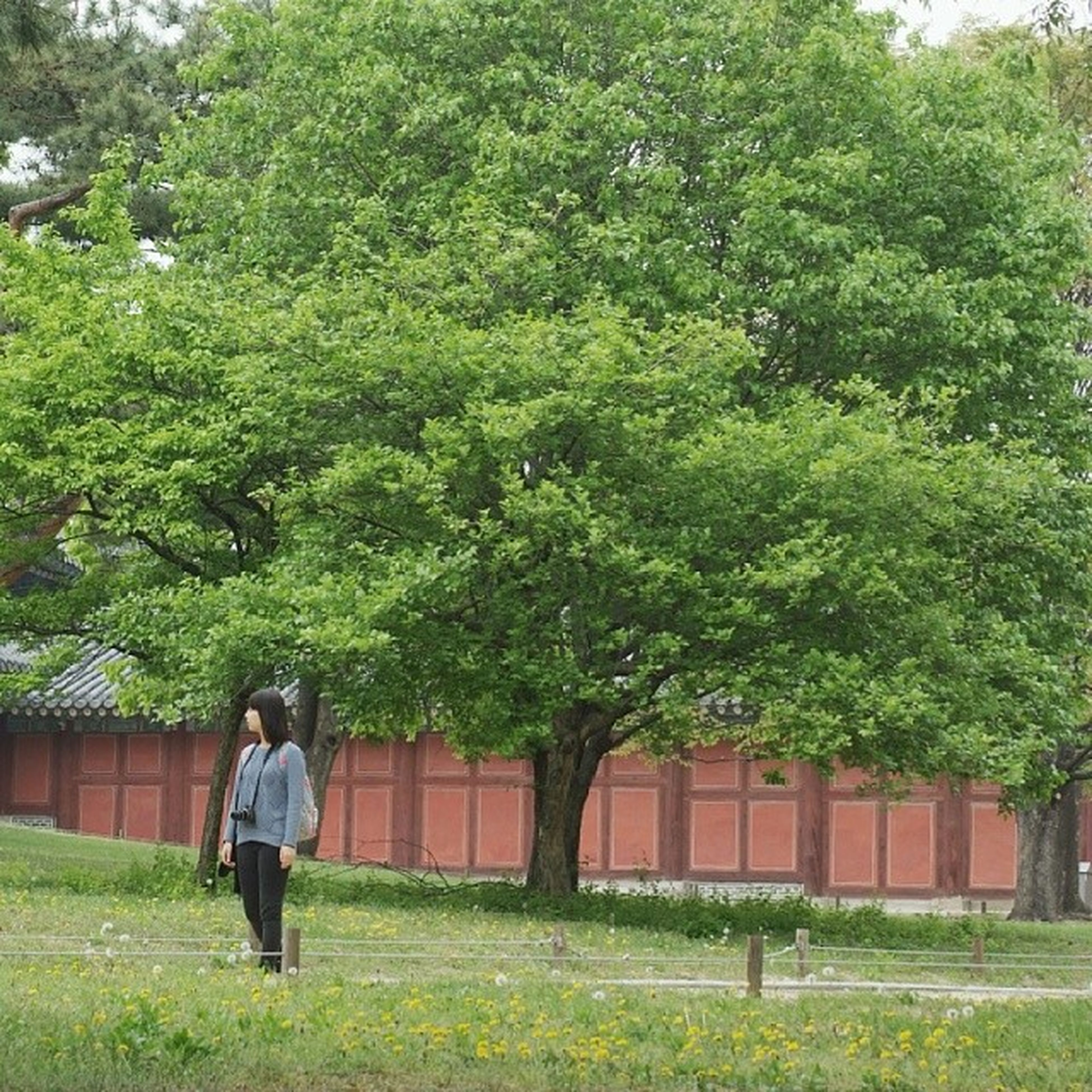 rear view, tree, full length, lifestyles, casual clothing, leisure activity, walking, men, grass, green color, standing, person, growth, plant, nature, day, outdoors, building exterior