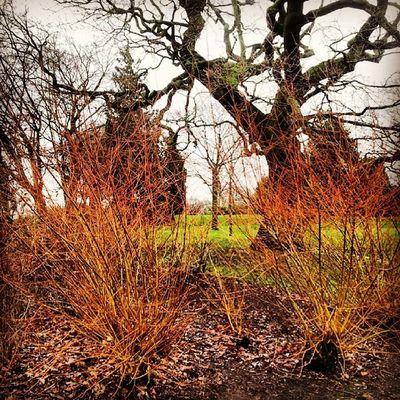 Kingsheathpark Winter2014 Nature Trees Firecolour Winterwalks