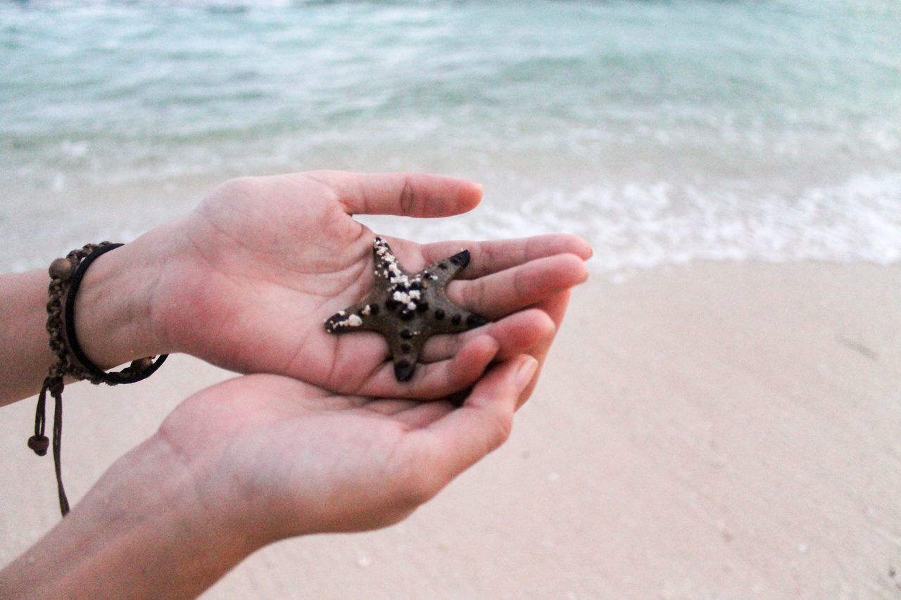 Human Hand One Animal Human Body Part Real People Holding Focus On Foreground Beach Starfish At Beach Close-up Water Sea Beauty In Nature Holding In Hand Copy Space Minimalism Fragility Nurture  Protect