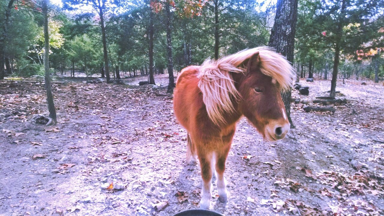 Beautiful stock photos of pony, Animal Themes, Branch, Brown, Day