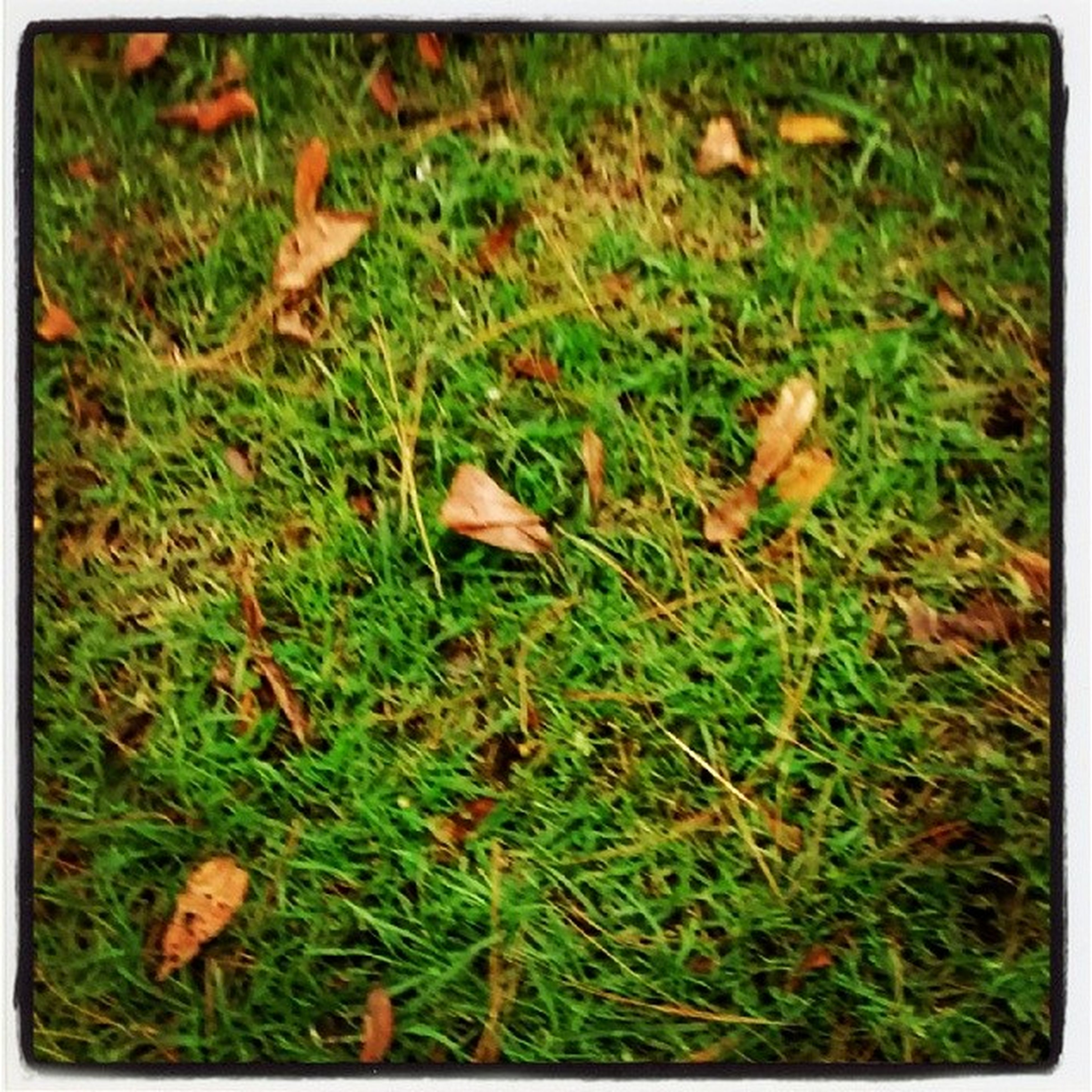 grass, transfer print, field, leaf, autumn, auto post production filter, high angle view, dry, grassy, nature, change, leaves, fallen, growth, green color, ground, season, fragility, day, close-up