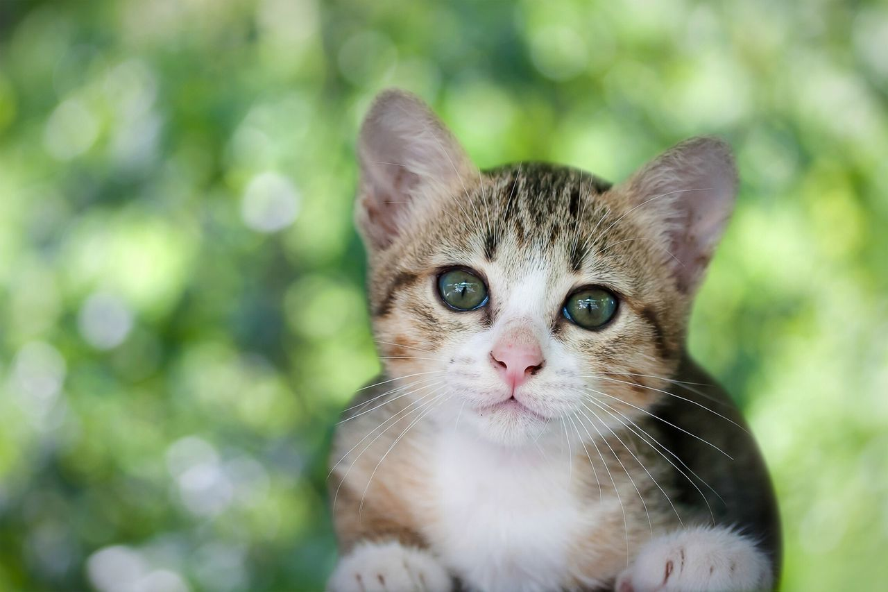 Domestic Cat Mammal Domestic Animals Animal Themes Pets Whisker Focus On Foreground One Animal Feline Looking At Camera Portrait Close-up No People Nature Day Outdoors Cat Cats Cat♡ Cat Lovers Kitty Kitten Cute Cute Pets Adorable