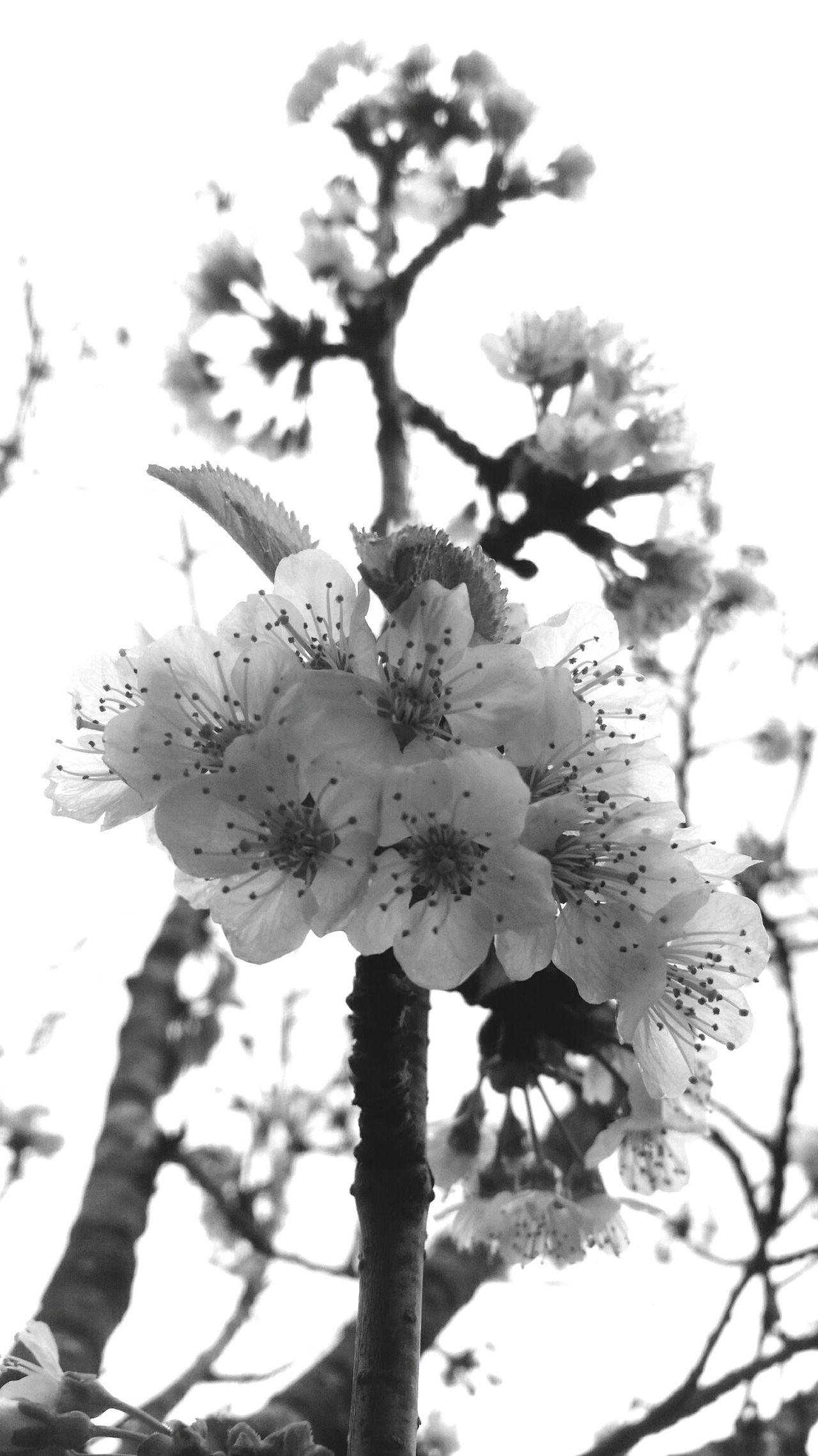 Flower Collection Flowerporn Flowers Blackandwhite Blackandwhite Photography Bohemian Natural Beauty Flower Photography Beautiful Nature Beautiful