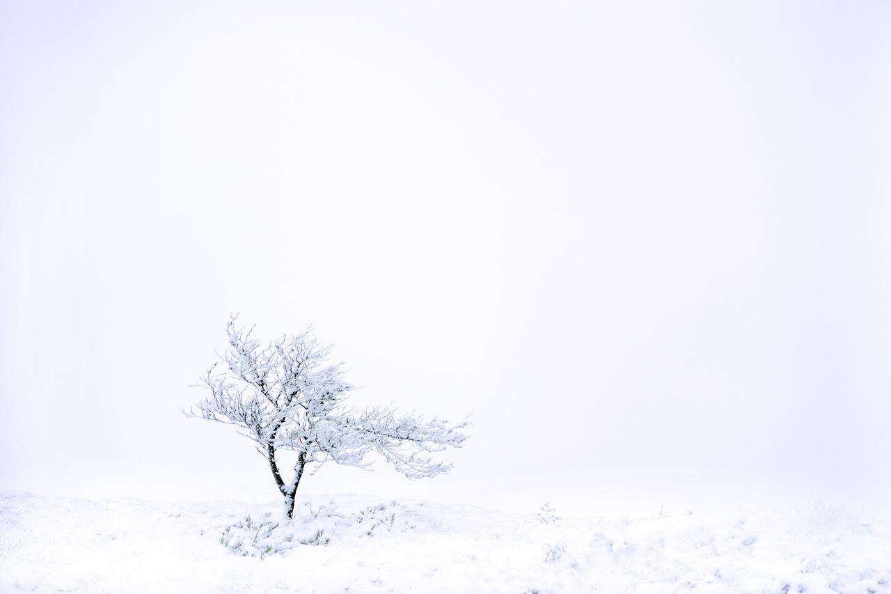 Beautiful stock photos of design, winter, no people, nature, tree