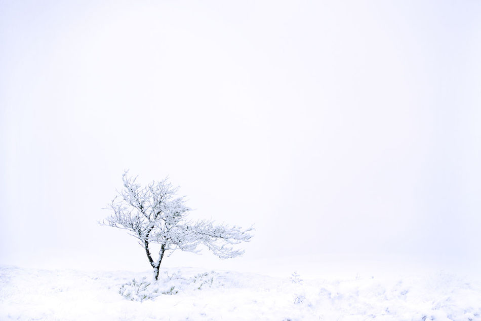 Beautiful stock photos of design, lone, isolated, bare tree, tranquility