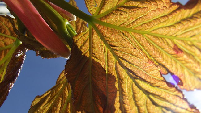 A pretty plant that's growing in my garden Beauty In Nature Blue Blue Sky Close-up Day Detail EyeEm Best Shots EyeEm Nature Lover Focus On Foreground Getting Inspired Green Green Color Growth Leaf Learn & Shoot: Simplicity Leaves Leaves Only Leaves Lookingup Multi Colored Nature No People Outdoors Part Of Selective Focus Sky
