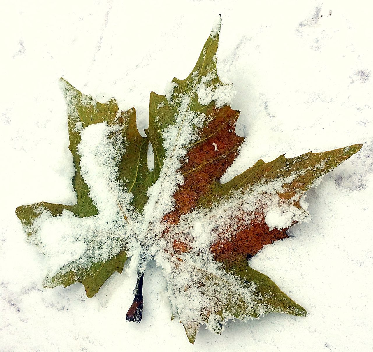 Close-up Cold Winter ❄⛄ Leaf Leaf In The Snow Leafs Photography Nature Snow Winter