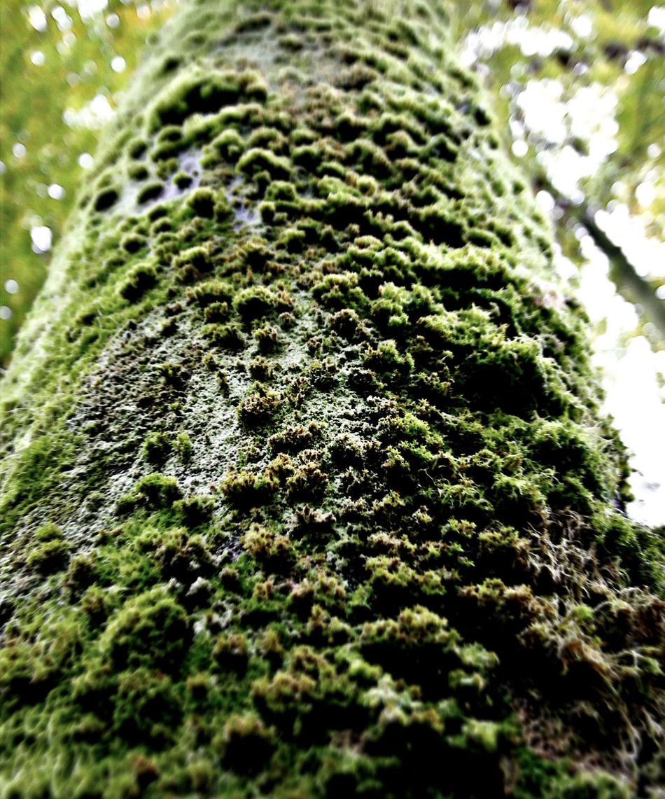 Moss on a tree Beauty In Nature Close-up Day Desaturated Green Green Color Growth Growth Moss Mossporn Nature Nature Nature Photography Nature_collection Naturelovers No People Outdoors Textured  Tree Tree Tree Trunk