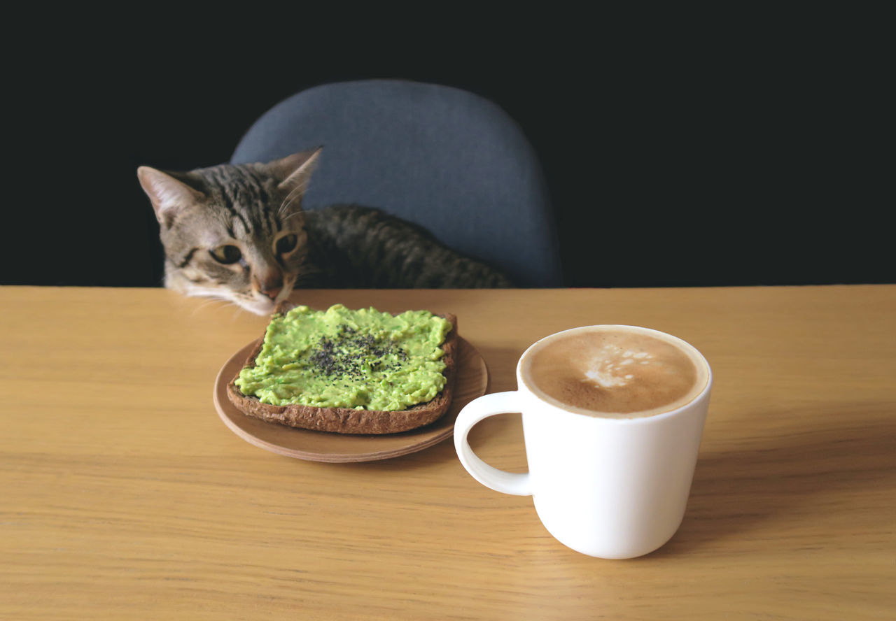 Animal Avocado Avocado Toast  Black Background Breakfast Chair Coffee Coffee Cup Domestic Cat Feline Indoors  Pets Tabby Cat Table