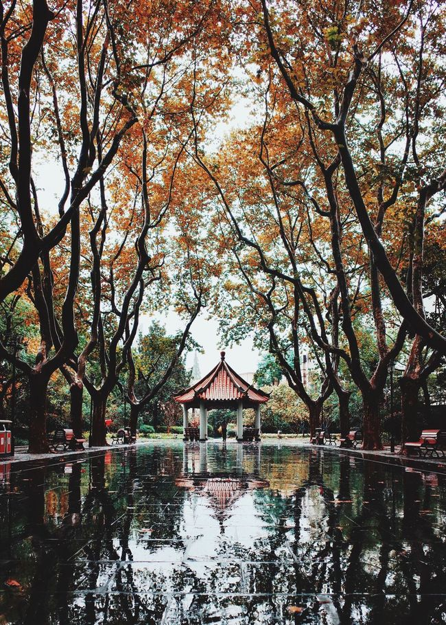 The park in the rainy day From My Point Of View My Street Photography Shanghai Photography Street Photography Shanghai Streets Shanghai Tree Reflection Waterfront No People Rainy Days Park City Life Autumn Colors Autumn Leaves Autumn Trees Autumn Rain