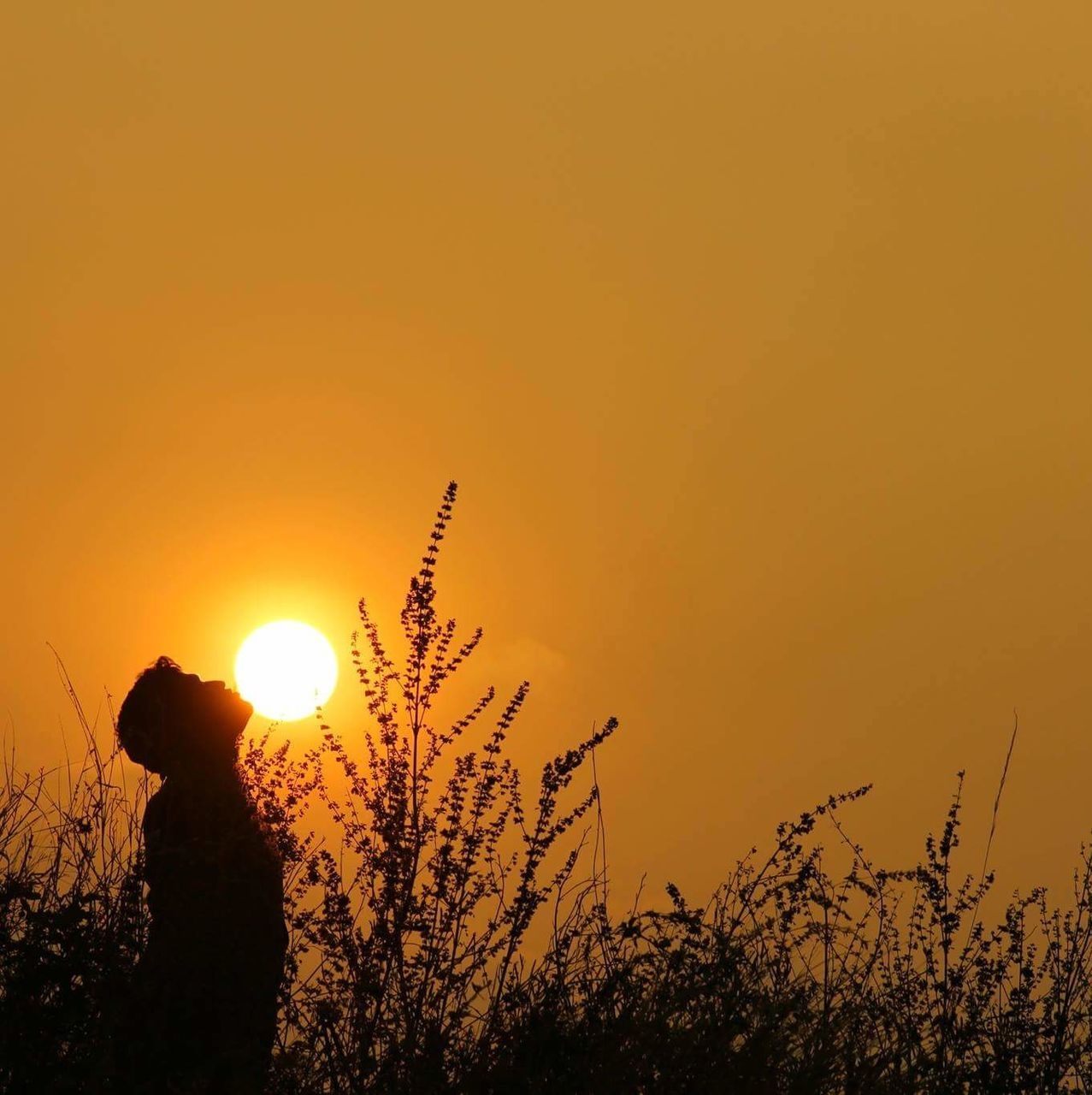 Silhouette Of Person Standing In Field At Sunset