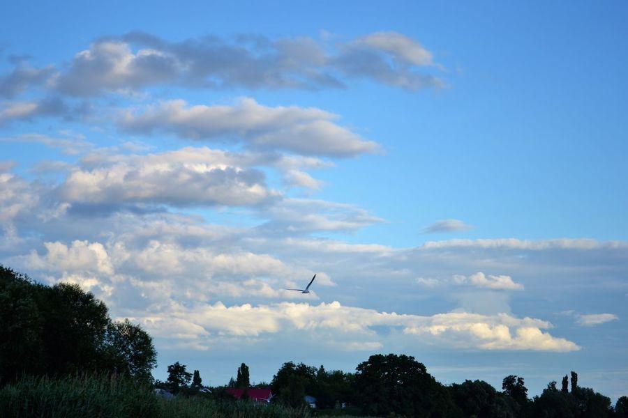 Animal Themes Beauty In Nature Bird Cloud - Sky Flying Nature No People Scenics Sky Sunset Tree Ukraine Yahotyn
