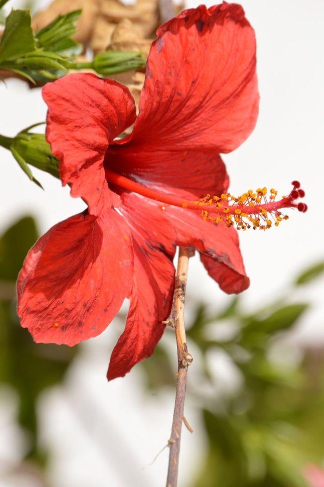 🌺🌺❤️❤️❤️ تصويري_نيكون صوري_صور_مصور ابوسني تصويري♡ Beautiful Rose ♡