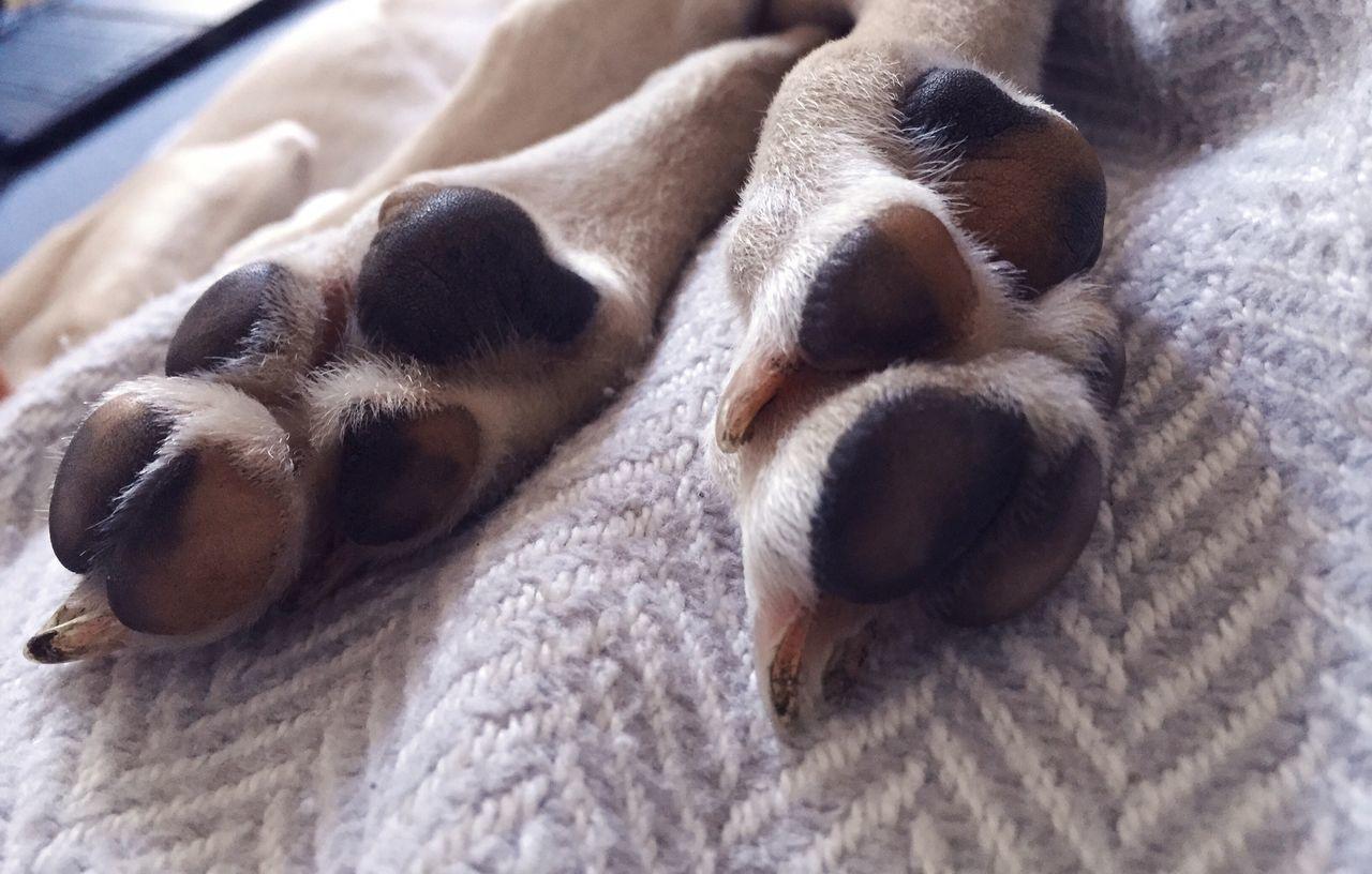 Animal Themes One Animal Dog Pets Close-up Dogpaws Paws Pawsome PawfectPhotography Littledog Babydog Doggybu Musco