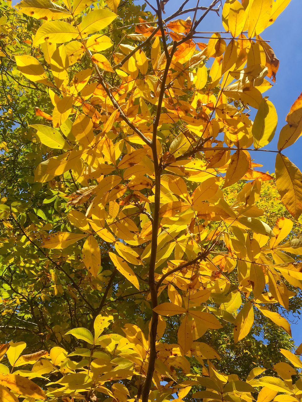 yellow, growth, leaf, sunlight, tree, nature, branch, outdoors, day, flower, no people, beauty in nature, fragility, plant, low angle view, freshness, close-up