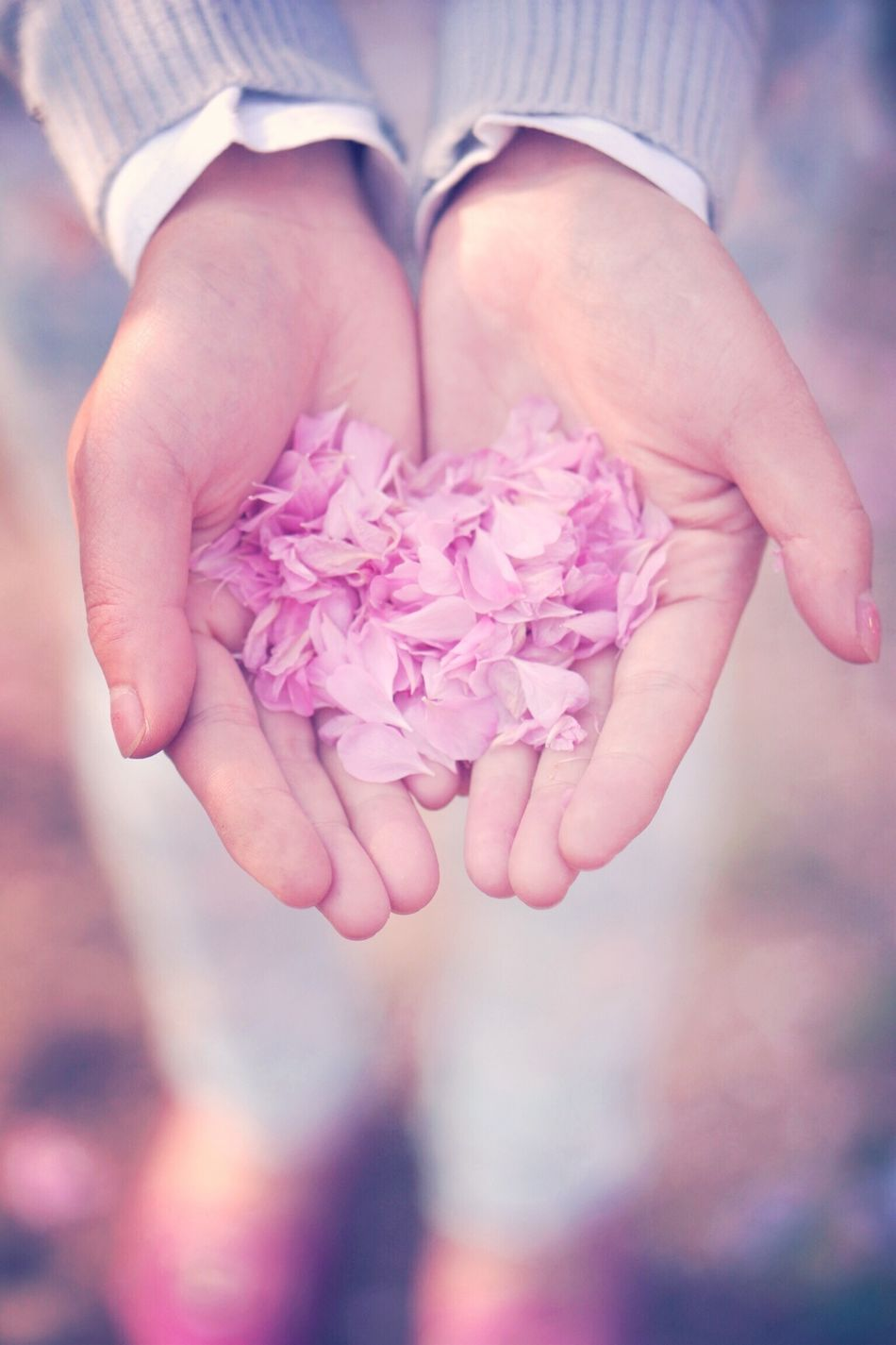 Beautiful stock photos of pink, Beauty In Nature, Detail, Flower, Focus On Foreground