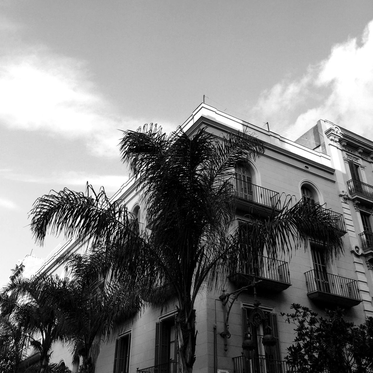 Architecture Barcelona Bcn Historic Local Old Palm Palm Tree SPAIN Typical