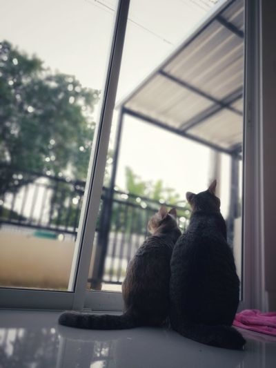 Cat Cat Thailand :) Window Indoors  Day Pets Animal Themes Adult People