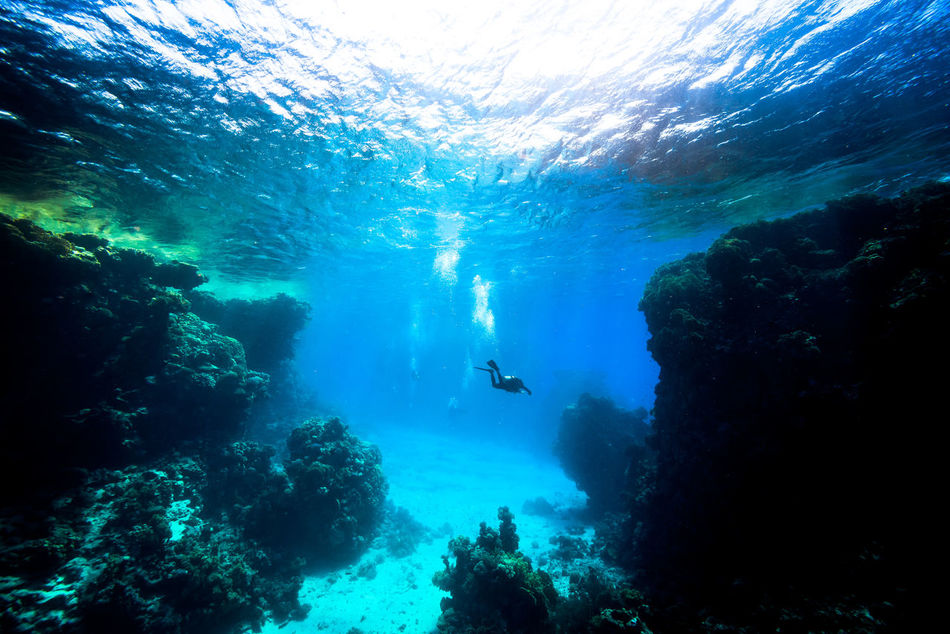 red sea Adventure Aquatic Sport Beatiful Nature Escape Exploration Explorer Extreme Adventures Leisure Activity Light And Shadow Nature Ocean One Person Real People RedSea Scuba Diver Scuba Diving Scubadiving Sea Solo Traveller Swimming Travel Photography UnderSea Underwater Unusual Beauty Water