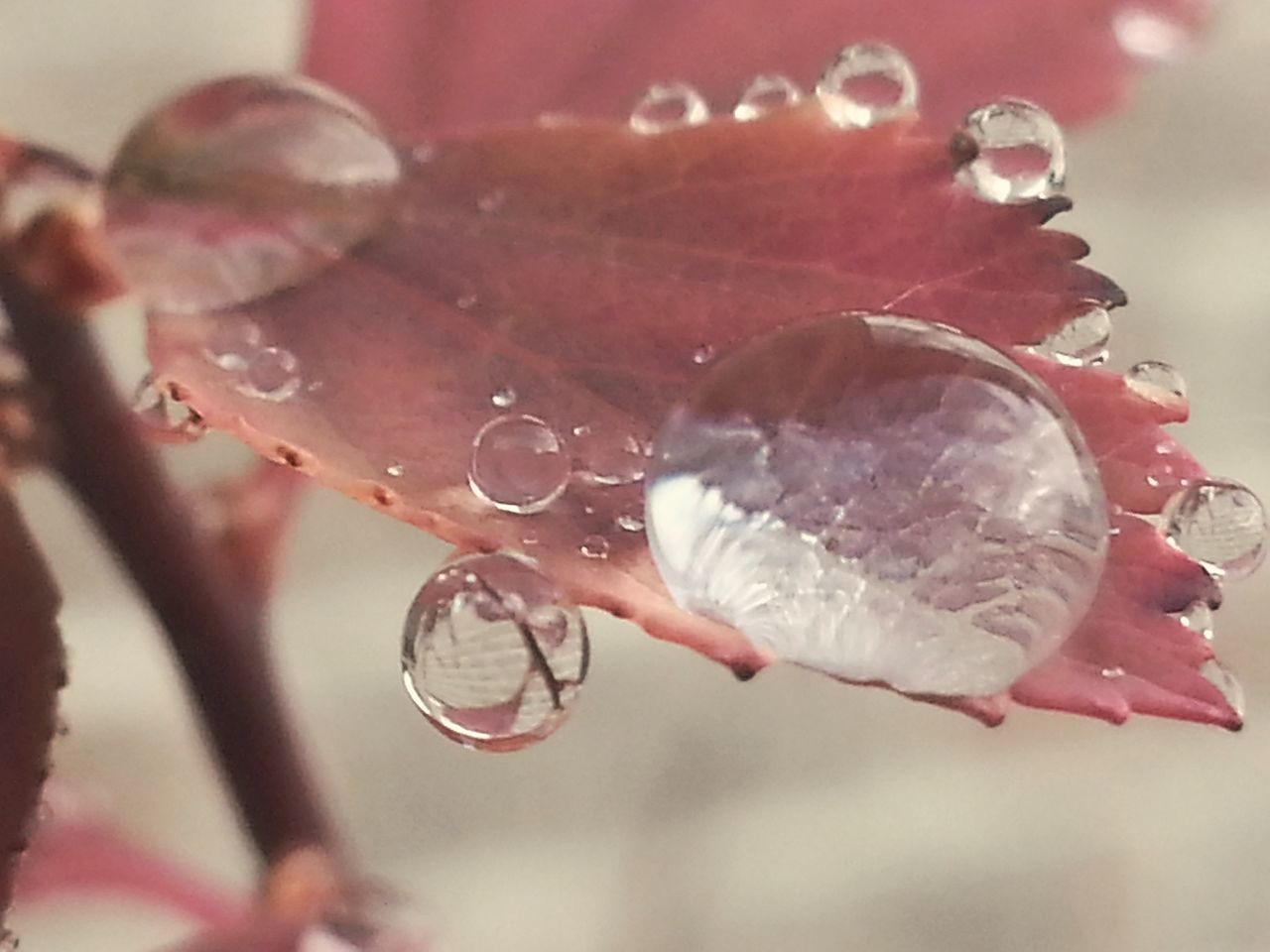 Just going through my roll... Appreciate The Little Things In Life Drops Drops Of Water Droplets Droplets On Leaves Water Globe Fall Leaves Rainy Weather Macro Macro Nature Nature Is Art Natural Phenomenon | Focus On Foreground Close-up Fragility Water Motion Nature No People Day Outdoors