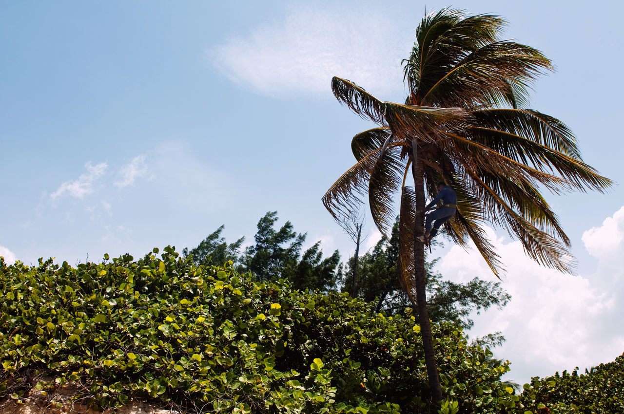Beautiful stock photos of cuba, Beauty In Nature, Cloud, Cuba, Day