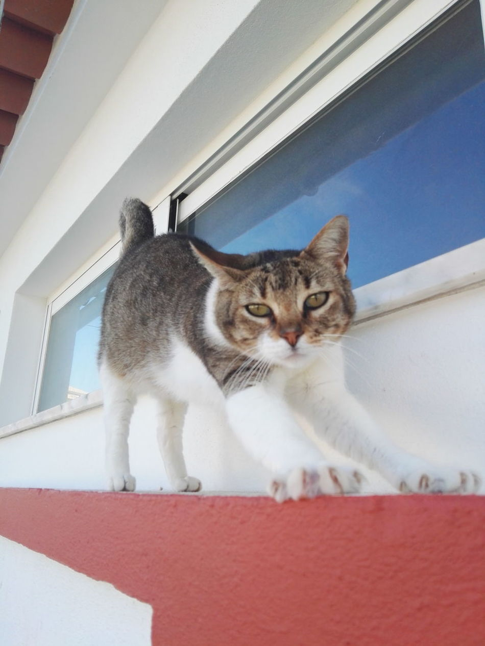 Hanging Out Taking Photos Vacation Time Cat Lovers Cats 🐱 Catsoftheworld Catslife Odeceixe Lazy Cat