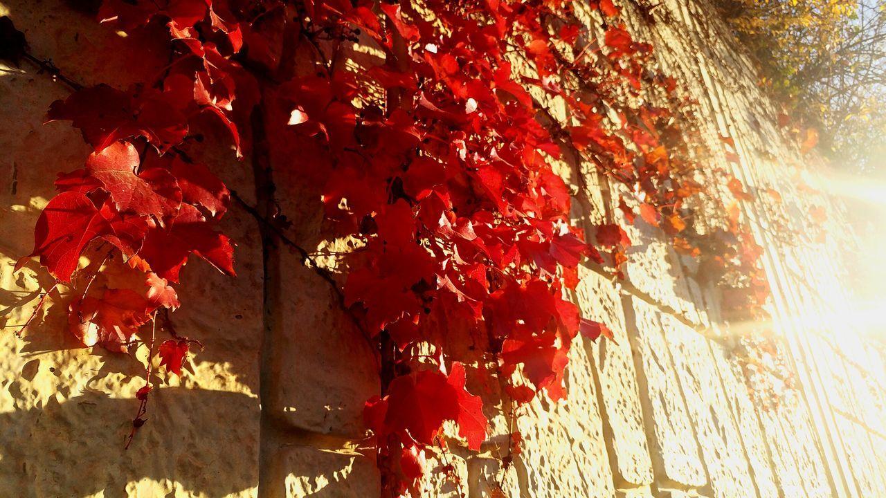 Leaves Shadow Autumn Leaves Shadows & Lights