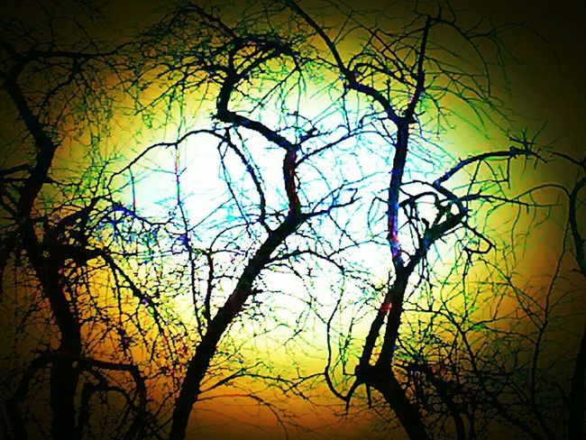 Two Trees Eerie Edits Mystyle Afterlightapp