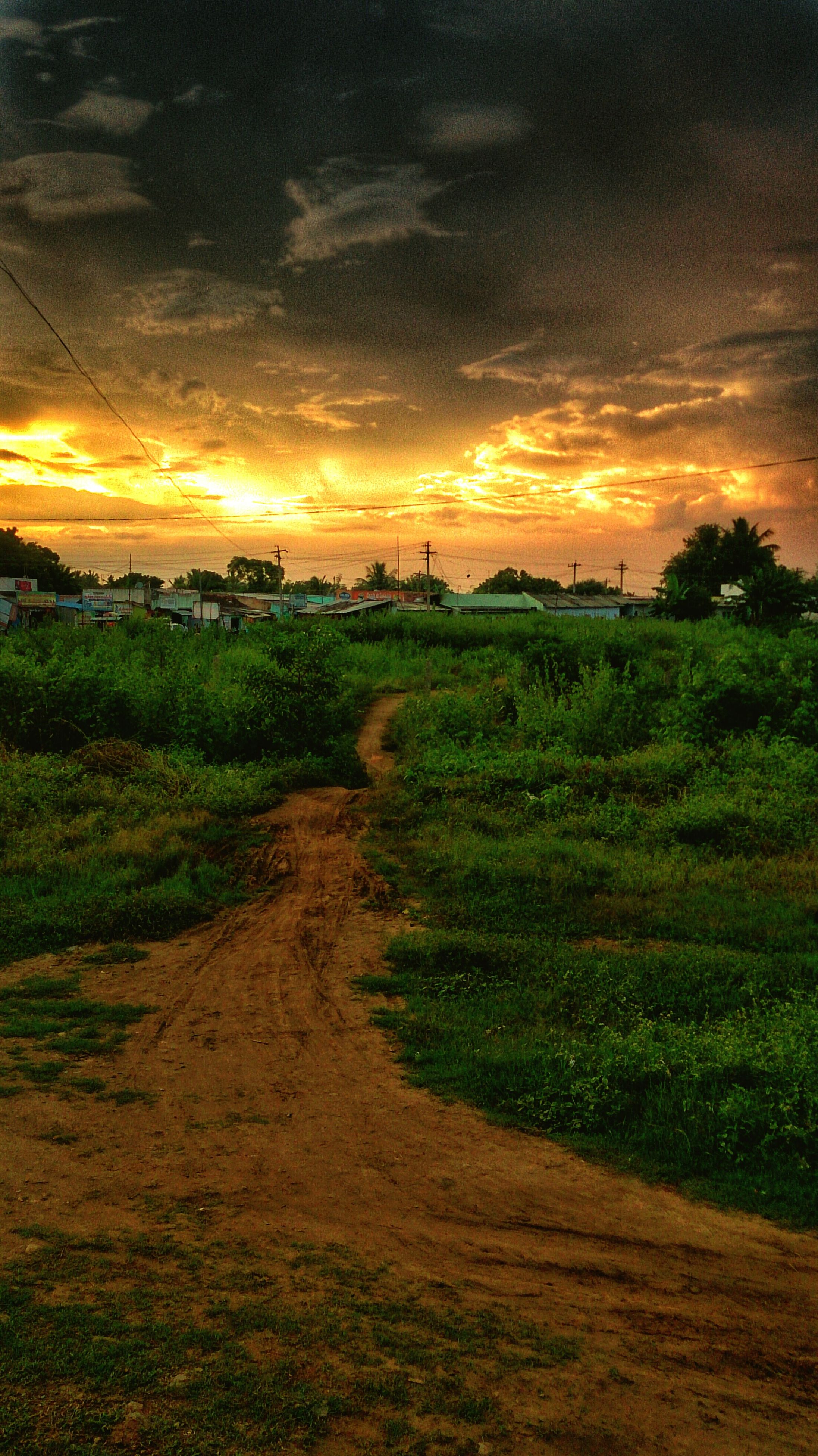 sunset, sky, tranquil scene, landscape, scenics, field, tranquility, beauty in nature, cloud - sky, orange color, nature, grass, idyllic, rural scene, tree, growth, dramatic sky, agriculture, cloudy, cloud