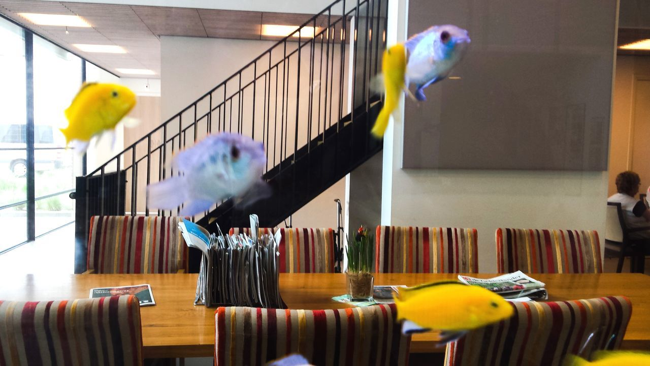 Acquarium Animal Themes Bird Birdcage Budgerigar Cage Day Domestic Animals Fanny Photo Fanny ❤️ Fantasy Dreaming Fantasy Photography Fishes Indoors  Mammal Multi Colored No People Parrot Perching Pets Yellow
