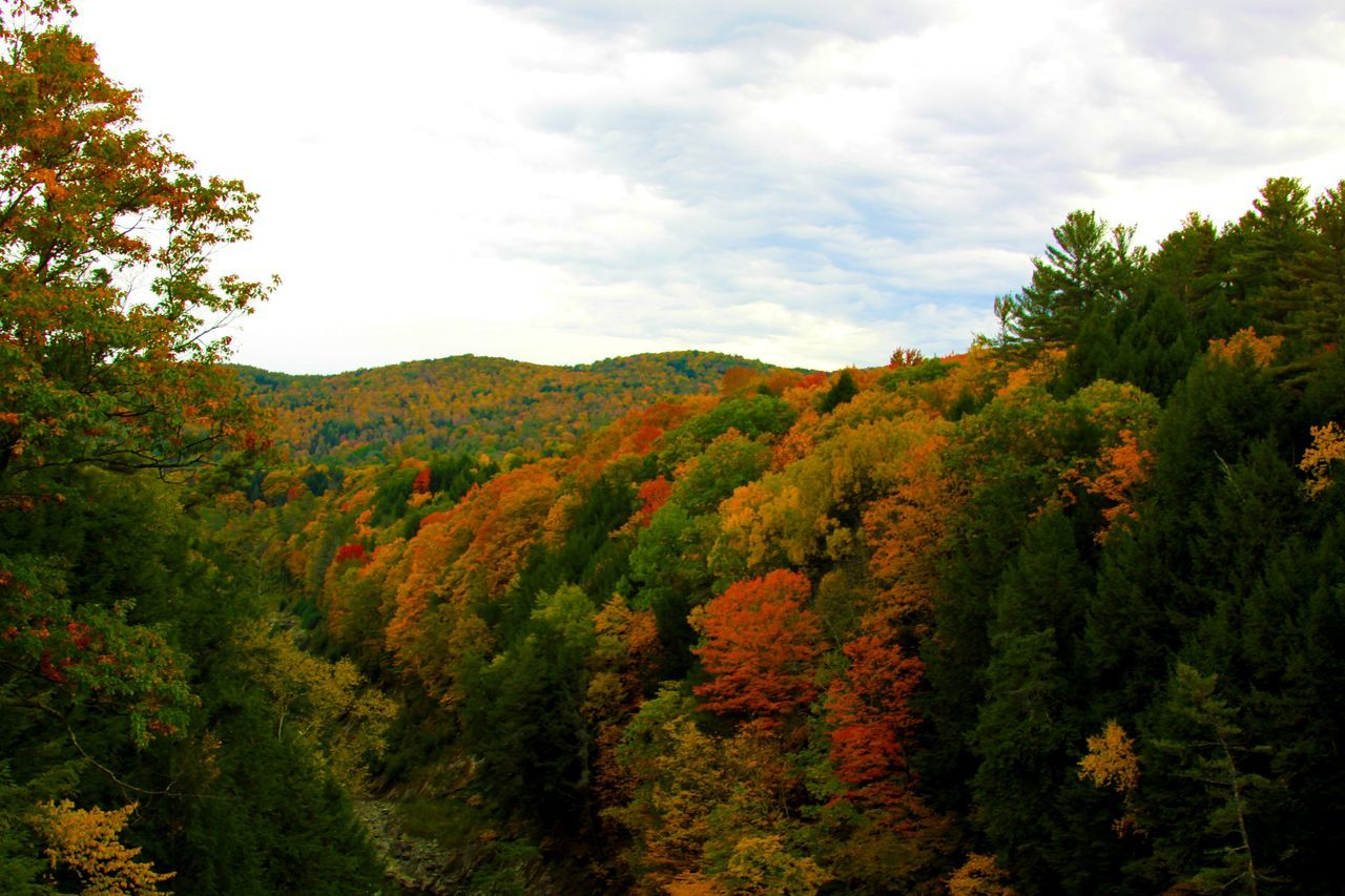 Autumn Beauty In Nature Change Day Growth Idyllic Landscape Leaf Lush Foliage Nature New Hampshire No People Outdoors Peak Weeken Peak Weekend Scenics Sky Tranquil Scene Tree Treetop Vermont