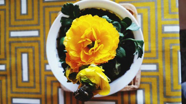 Enjoying Life Yellow Flowers Taking Photos Flowers Detailsofmylife Details Of My Life Rengarenk Benimgözümden Benimkadrajim Design Design Photo