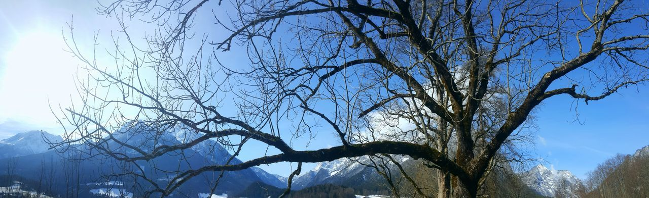Tree Sky Nature No People Outdoors Clear Sky Tranquility Branch Day Bare Tree Beauty In Nature Panorama Panoramic Landscape Panoramic Panoramashot Berchtesgadener Land  Germany Beauty In Nature