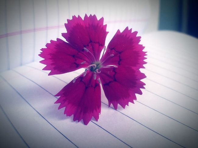 Photography Mobile Photography NiceShot Yikes! Nature_collection Nature Photography Awesome_captures Flowers RedFlower Feeling Happy Nice Amazing To  Capture The Moment