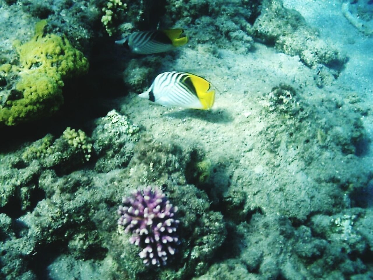 Egypt Fish Underwater Trip Hello World Corals Animal_collection Colors Discovery Summer Lamdscapes With Whitewall Nature's Diversities