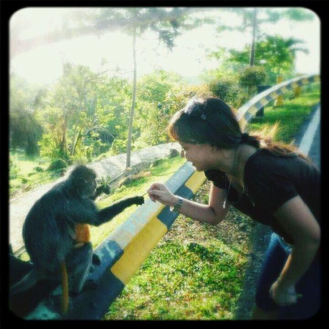 Hi! cute mama n baby Monkey