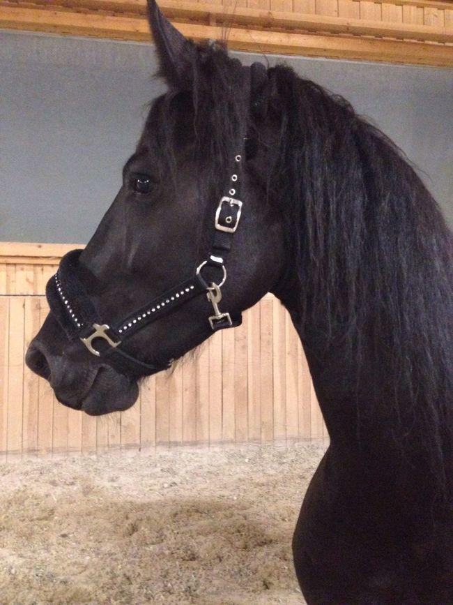 Lilli💝 Enjoying Life I Love Horses Horse Friesen I Love My Horse Horses IPhoneography Horse <3