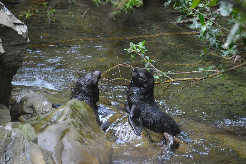 EyeEmNewHere Outdoors Nature Natural Seals Playing Seal Colony Seals Baby Seal Kaikoura Traveling New Zealand Travel