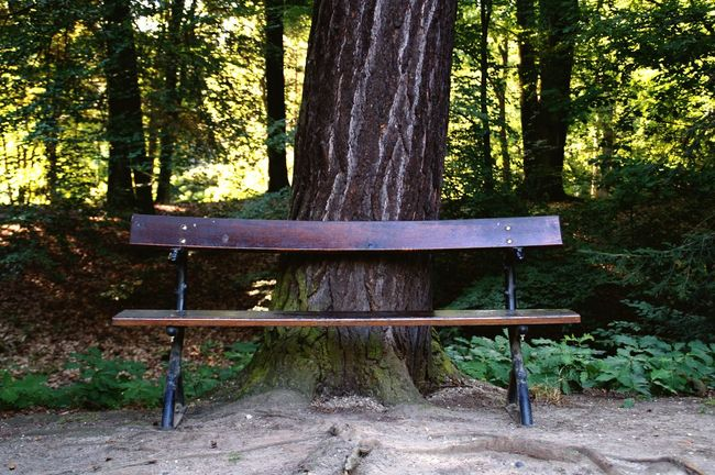 Have A Seat Park Bench Tranquility Seat Tranquil Scene Outdoors Tree Bench Wood - Material In The Forest EyeEm Nature Lover Beauty In Nature Taking Photos Taking Pictures Somewhere Walking Around Benchlovers Bench Chillin' Chill Mode Nature No People Nature EyeEm Best Shots Scenics