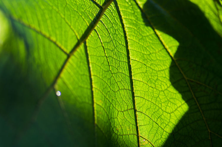 Beauty In Nature Close-up Day Fragility Freshness Green Color Growth Leaf Nature No People Outdoors Sunlight
