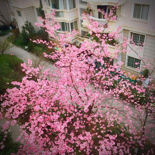 春天该很好,你若尚在场 Spring Spring
