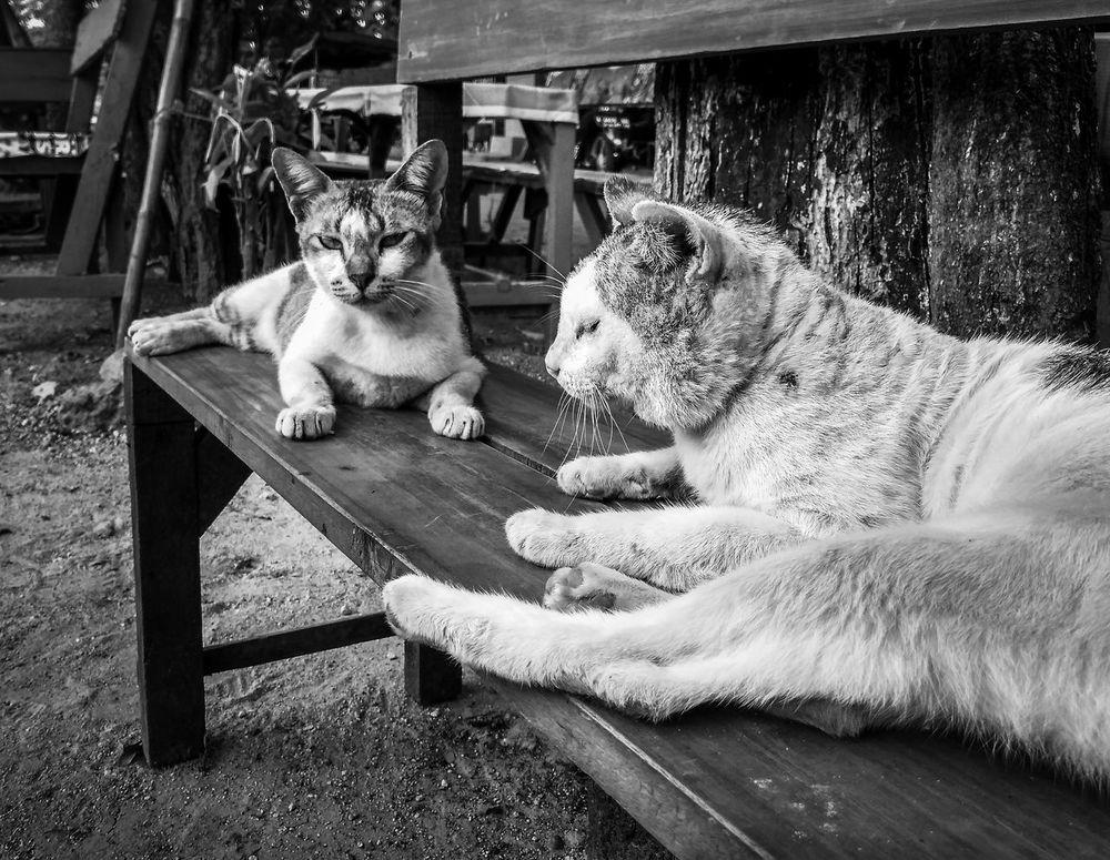 Hello Hooman 😸😸 Pets Animal Themes Domestic Animals Mammal No People One Animal Outdoors Day Portrait Art Close-up Xiaomi Cat Redmi4a Cute Animal Blackwhite Bw Art Imaging Editing