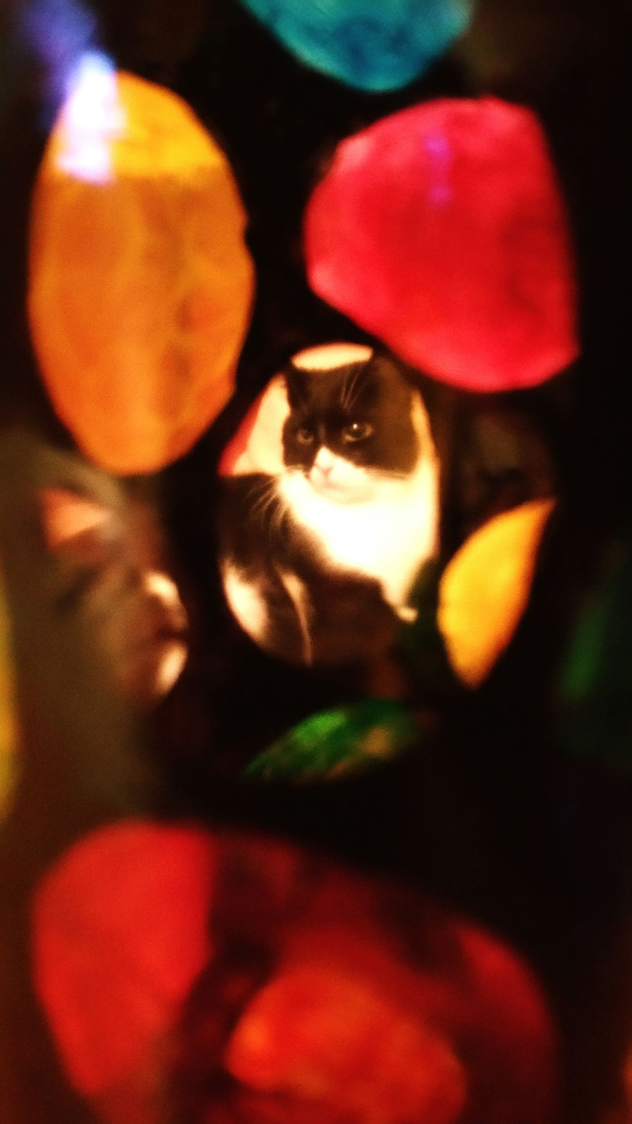 Cat behind a Painted Winebotttle Art Colors Window