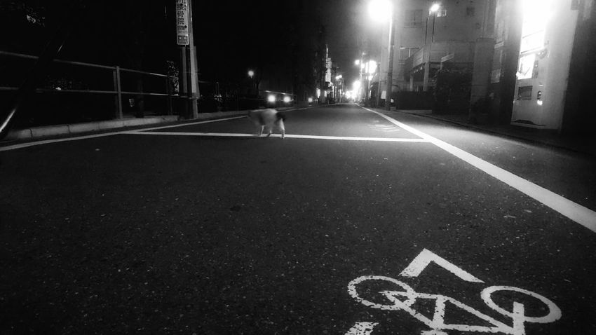 歩く猫 野良猫 野良猫ウォッチング 街貓 Cat Walking Cat Watching Night Town Night Life Night Photography No People Night Lights On The Road Light Up Your Life From My Point Of View Capture The Moment Black And White Monochrome Monochrome Photography Light And Shadow Vanishing Point Where Are You Going ? Snapshots Of Life 日常 Snapshot